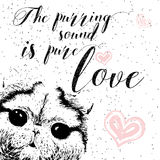 The purring sound is pure love, greeting card and motivational quote for pet lovers with typographic design. Stock Photography