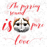 The purring sound is pure love, greeting card and motivational quote for pet lovers with typographic design. Stock Images
