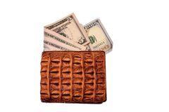 Purse of crocodile leather brown money money dolar currency on isolated on white background Stock Photography