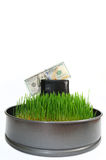 Purse with money in a grass Royalty Free Stock Photos