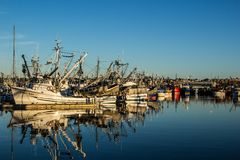 Purse seiners moored at fisherman`s terminal in Seattle Washington. Purse seine fishing can be a relatively sustainable way of fishing, as it can result in Royalty Free Stock Images