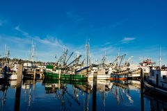 Purse seiners moored at fisherman`s terminal in Seattle Washington. Purse seine fishing can be a relatively sustainable way of fishing, as it can result in Stock Photo