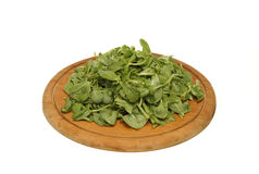 Purslane Stock Photography