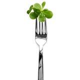 Purslane on Fork Stock Images