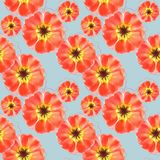 Purslane, portulaca. Seamless pattern texture of flowers. Floral royalty free illustration