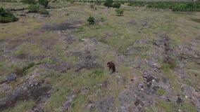 Puru Kambera Savanna, isola di Sumba l'indonesia archivi video