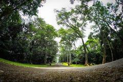 Purwodadi植物园,岩望,印度尼西亚 免版税库存图片