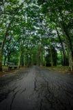 Purwodadi植物园,岩望,印度尼西亚 免版税库存照片