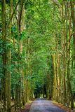Purwodadi Botanische Tuin, Pasuruan, Indonesië Royalty-vrije Stock Fotografie