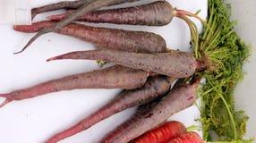 Pusa hybrid Carrot Stock Image