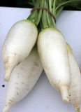 Pusa Shuka Radish Royalty Free Stock Photo