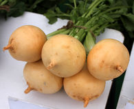 Pusa Swarnima Turnip. Turnip, Pusa Swarnima turnip, Brassica rapa, Cultivar developed at IARI, roots rounded with creamy-yellow skin and pale amber coloured Stock Images