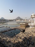 Puschkar Rajasthan. Pushkar in Rajasthan is one of the oldest cities of India.  In Pushkar, one of the biggest Cattle Fair is also held for trading purposes and Royalty Free Stock Photos