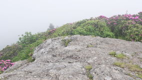 Push In Fog Blowing Over Rhododendron Blooms stock video footage