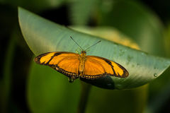 Push The Limits. Tropical Butterfly macro in green leafs Royalty Free Stock Image