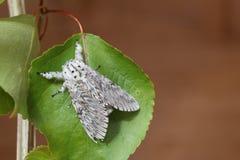 Push Moth stock image
