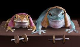 Push-ups del Froggy Fotografie Stock Libere da Diritti