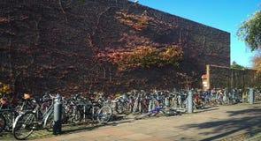 Pushbikes estacionou no pavimento Imagem de Stock
