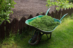 Pushcart full of cutted grass Royalty Free Stock Photography