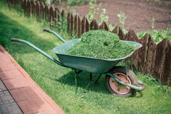 Pushcart full of cutted grass Stock Photo
