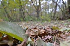 Pushcha-Vodica. Beautiful autumn nature in Kyiv Stock Photos