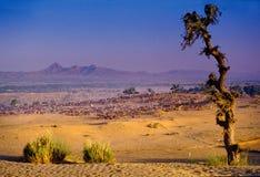 PUSHKAR, ÍNDIA - 17 DE NOVEMBRO: Camelos no fai anual dos rebanhos animais Imagem de Stock Royalty Free