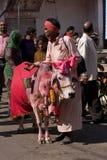 Pushkar, Индия. Стоковые Изображения