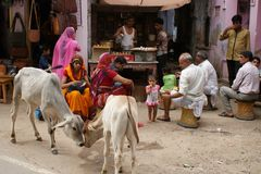 Жизнь улицы в Индии, Pushkar, Раджастхане Стоковая Фотография RF