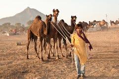 pushkar affärsman för kamel Fotografering för Bildbyråer