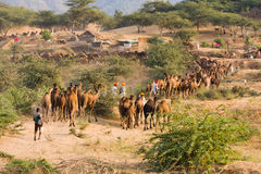 Pushkar angemessenes (Pushkar-Kamel Mela) Rajasthan, Indien Stockfotos