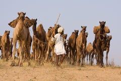 Pushkar angemessenes (Pushkar-Kamel Mela) Rajasthan, Indien Stockbild