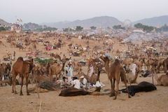 Pushkar Camel Fair Royalty Free Stock Photography
