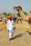 Pushkar Camel Fair - seller of camels during festival Royalty Free Stock Image