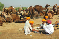 Pushkar Camel Fair - sellers of camels during fest Royalty Free Stock Photo
