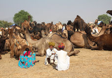 Pushkar Camel Fair - sellers of camels during festival Stock Photography
