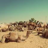 Pushkar Camel Fair - vintage retro style Stock Photos