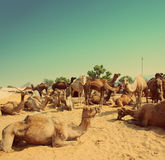 Pushkar Camel Fair - vintage retro style Royalty Free Stock Photos