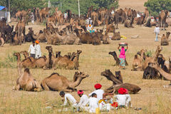 Pushkar Camel Mela (Pushkar Camel Fair) Royalty Free Stock Image