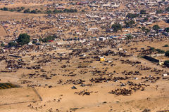 Pushkar Camel Mela ( Pushkar Camel Fair ) Stock Photo