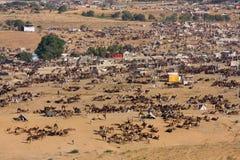 Pushkar Camel Mela ( Pushkar Camel Fair ) Stock Images