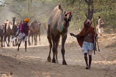 Pushkar Camel Mela ( Pushkar Camel Fair ) Royalty Free Stock Photography