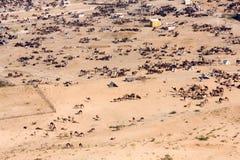 Pushkar Camel Mela ( Pushkar Camel Fair ) Stock Image