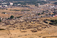 Pushkar Camel Mela ( Pushkar Camel Fair ) Rajasthan, India. Stock Photography