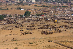 Pushkar Camel Mela ( Pushkar Camel Fair ) Rajasthan, India. Stock Photo