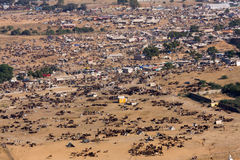 Pushkar Camel Mela ( Pushkar Camel Fair ) Rajasthan, India. Royalty Free Stock Photos