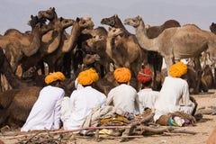 Pushkar (camello Mela de Pushkar) Rajasthán justo, la India imagen de archivo libre de regalías