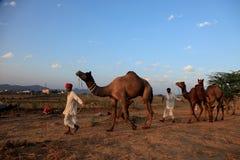 Pushkar Fair Stock Photography