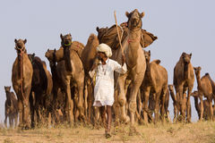 Pushkar Fair ( Pushkar Camel Mela ) Rajasthan, India Stock Photography