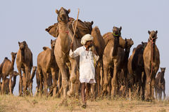 Pushkar Fair ( Pushkar Camel Mela ) Rajasthan, India Stock Images