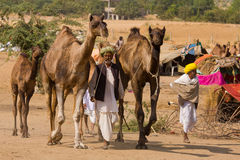 Pushkar Fair ( Pushkar Camel Mela ) Rajasthan, India Royalty Free Stock Photo